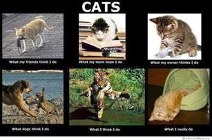 what do cats think about pictures page 3 the black tower social