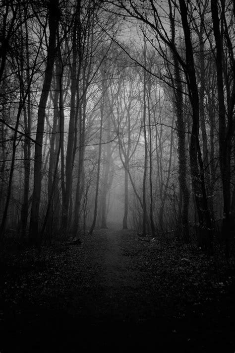 dark trees  behance