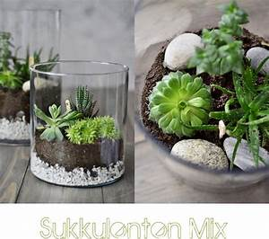 Sukkulenten Im Glas Pflanzen : nachmachtipp sukkulenten terrarien sinnenrausch der kreative diy blog f r wohnsinnige und ~ Eleganceandgraceweddings.com Haus und Dekorationen