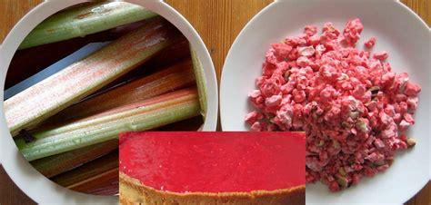 comment cuisiner la rhubarbe 28 images zoom sur la rhubarbe comment enlever l acidit 233 de