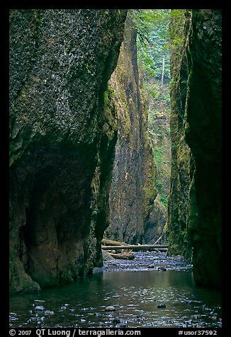 picturephoto oneonta gorge columbia river gorge oregon