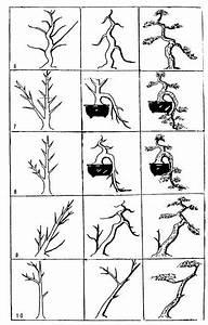 best 25 bonsai ideas on pinterest indoor bonsai tree With wiring bonsai roots