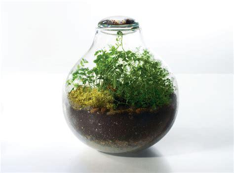 terrarium design glass artist creates majestic handblown terrariums terrarium by tracy glover inhabitat green
