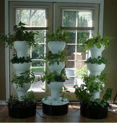 Hydroponic Plants Hydroponics Garden Vertical Foody Indoor