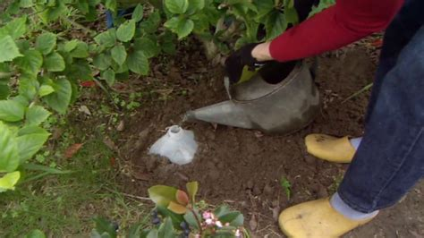 diy drip watering system for your garden today s