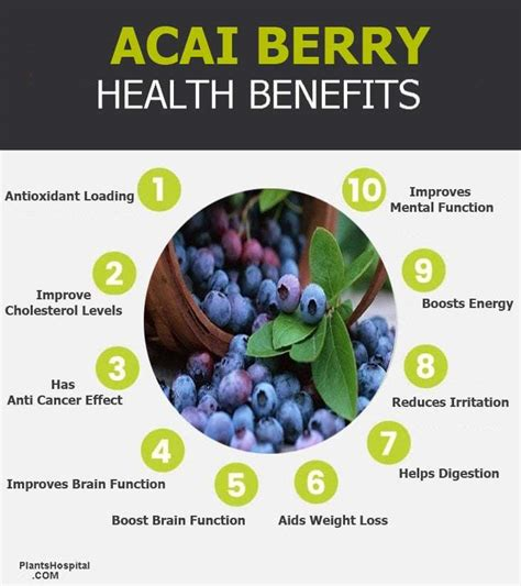 acai berry   eat   benefits  acai