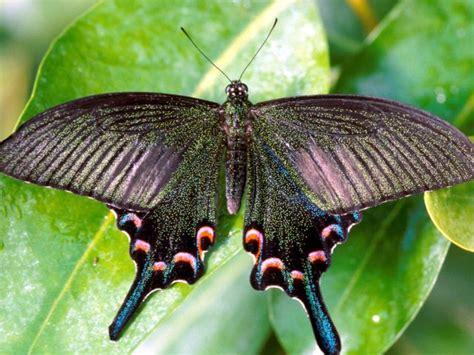 Botanischer Garten München Schmetterlinge by Tropische Schmetterlinge M 252 Nchen Das Offizielle