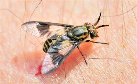 How To Combat Biting Flies