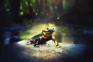 Salamander by Grivetart on DeviantArt