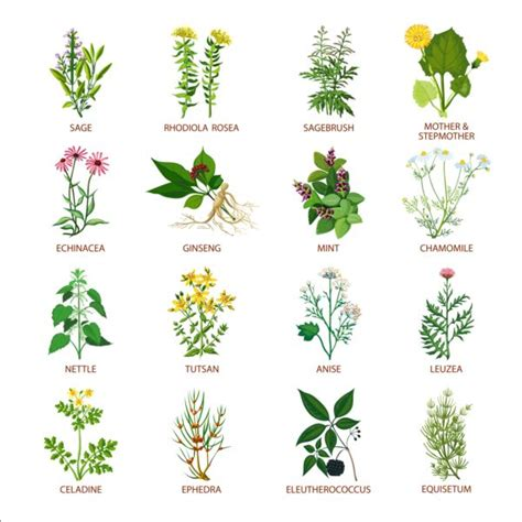 different types of plants top 28 different plants different types different types of plants plant 1 noun definition