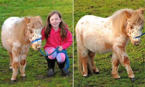 pony shetland eating