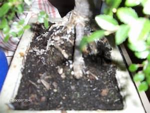 Schimmel Auf Blumenerde : schimmel in blumenerde amazing hand mit pflanze with schimmel in blumenerde perfect wie kann ~ Watch28wear.com Haus und Dekorationen
