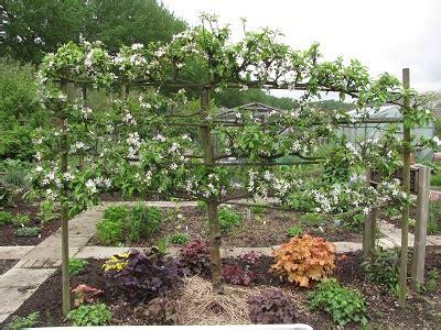 welke fruitboom in de tuin appel diana s mooie moestuin