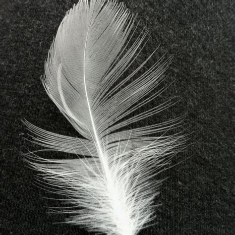 baby bird feather birds of a feather pinterest