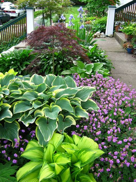 images of front yard gardens landscaping front yard landscaping ideas with hostas