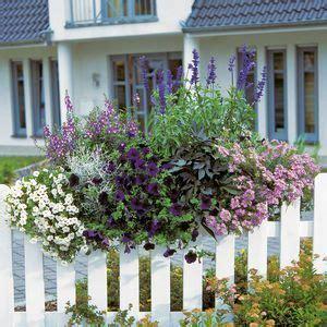 Blumenkästen Bepflanzen Ideen by Ideen Bepflanzung Balkonkasten