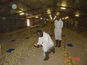 Ph Chart Image Inspecting Chicks Placement In Wajid Farm Ref 28569