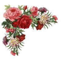 Download Flower Category Png Clipart and Icons