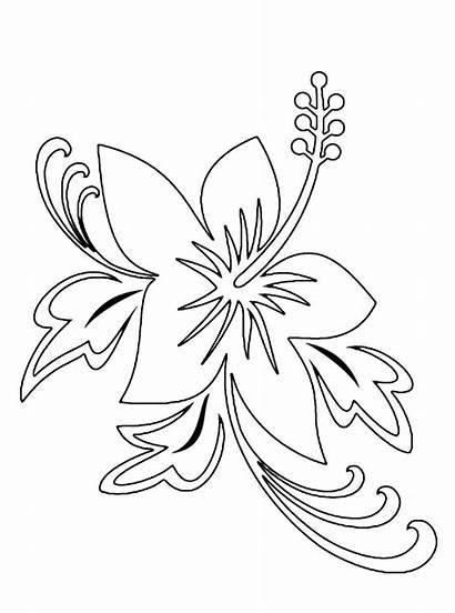 Flores Hawaianas Dibujos Pintar Imprimir Colorear Bonitas