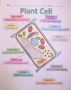A School Called Home  Growing Some Plant Cells