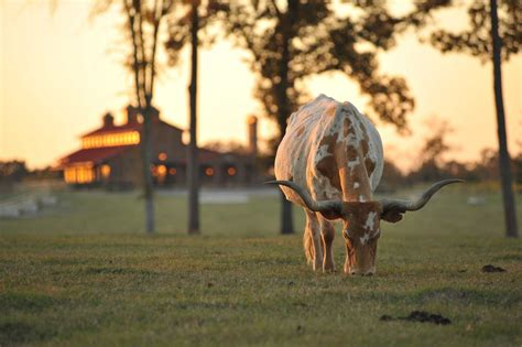 ranch texas undisclosed massive million palace acre northeast amount estimated tuesday auction around buyers homes