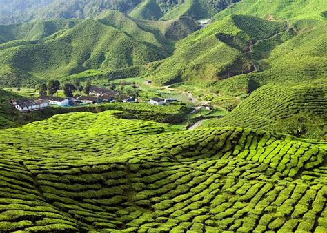 explore  cameron highlands malaysia audley travel