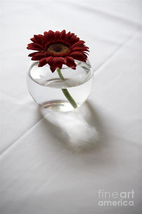 single red gerbera flower   vase  white table linen