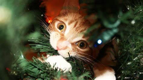 cats guide  christmas youtube