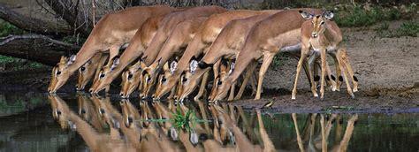 South Africa Safari - Kruger National Park | Somak Holidays