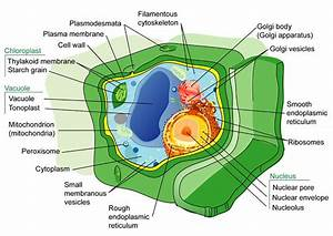 Plant Cell Structures   Read