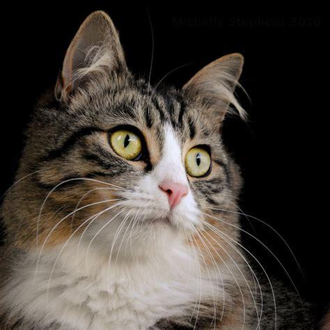 Portrait Of A Fancy Cat By Michelleyo On Deviantart