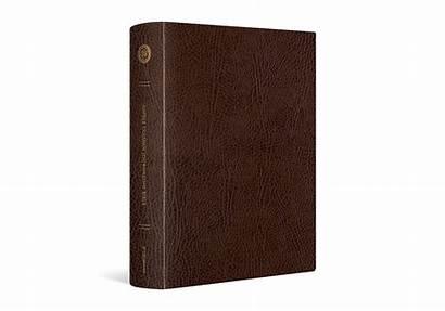 Bible Esv Journaling Column Single Leather Bonded