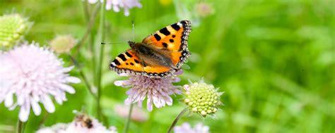 Schmetterlinge Fördern Im Garten Und Auf Dem Balkon Pro
