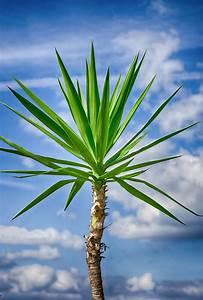 Bilder Von Palmen : palmen und blauer himmel s doststeiermark ~ Frokenaadalensverden.com Haus und Dekorationen