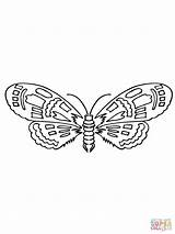 Moth Coloring Printable Drawing Paper Supercoloring Categories sketch template