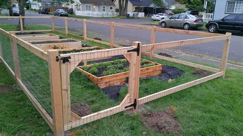 vegetable garden fence chicken wire images and photos
