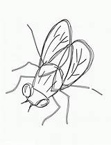 Fly Coloring sketch template