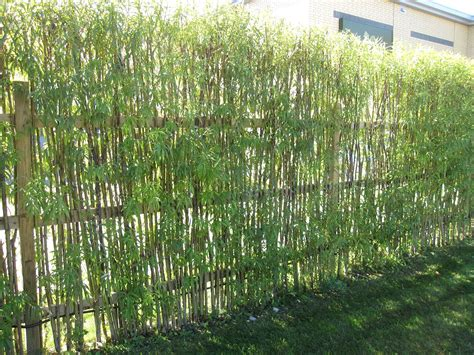 Zaun Aus Pflanzen by Bamboo Fencing Design Ideas For Your Inspiration