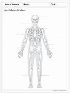 Human Skeleton - Label