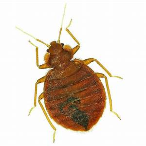 pest control in minneapolis st paul mn and western wi With bed bugs minnesota
