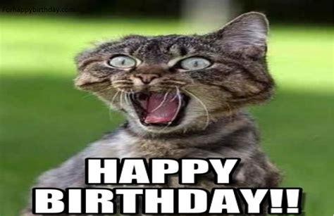 100 Best Happy Birthday Cat Memes & Images