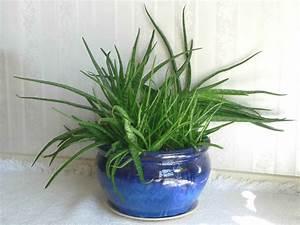 Aloe Vera Ikea : haal voor slechts 2 50 een alo vera plant en gooi veel cr mes in de prullenbak creatieve idee n ~ Preciouscoupons.com Idées de Décoration
