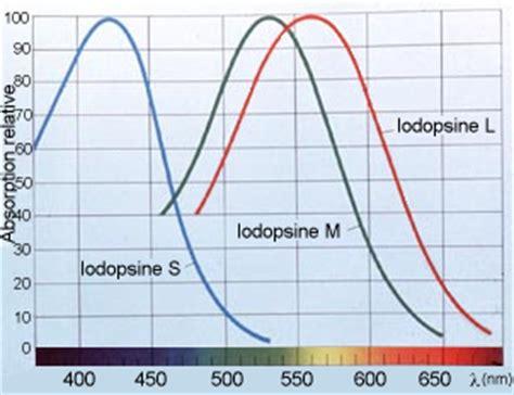 un oeil hypermetrope exercice ii la perception des couleurs d un œil fonctionnel la tion