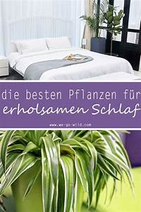 Zimmer Geruch Entfernen : pflanzen im schlafzimmer 9 luftreiniger helfen beim schlafen ~ Markanthonyermac.com Haus und Dekorationen