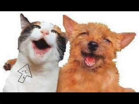 hund und katze singen lied voll suess hoert euch das