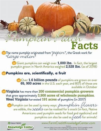 Facts Pumpkin