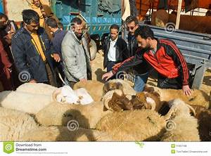 Bargaining For A Sheep For The Sacrifice Of Eid Al ...