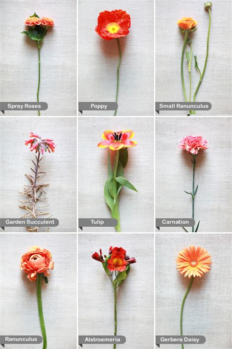 flower names a bunch of flowers decorator s notebook