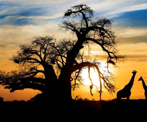 South Africa & Namibia: Tops for an African Safari ...