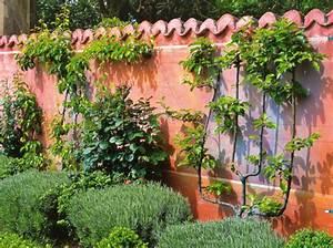 Que Mettre Sur Un Mur En Parpaing Interieur : comment habiller le mur de son jardin nos id es en images ~ Melissatoandfro.com Idées de Décoration